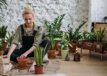 Gajenje biljaka