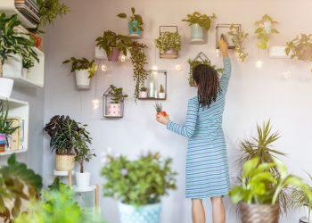 najzdravije kućne biljke