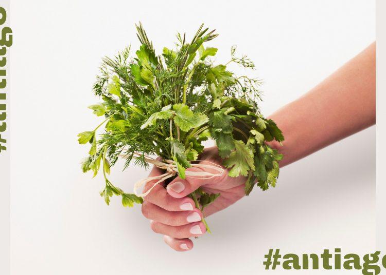 antiejdž začinsko bilje