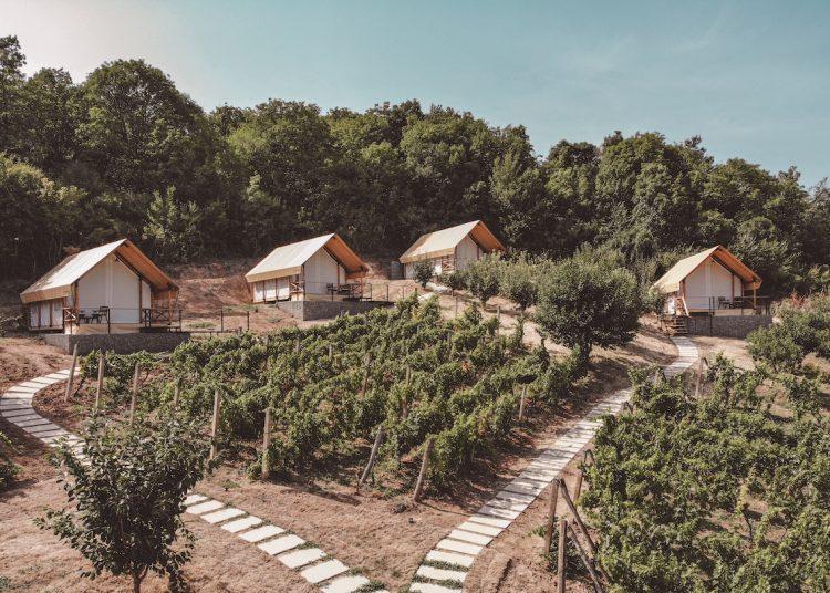 lala vineyard
